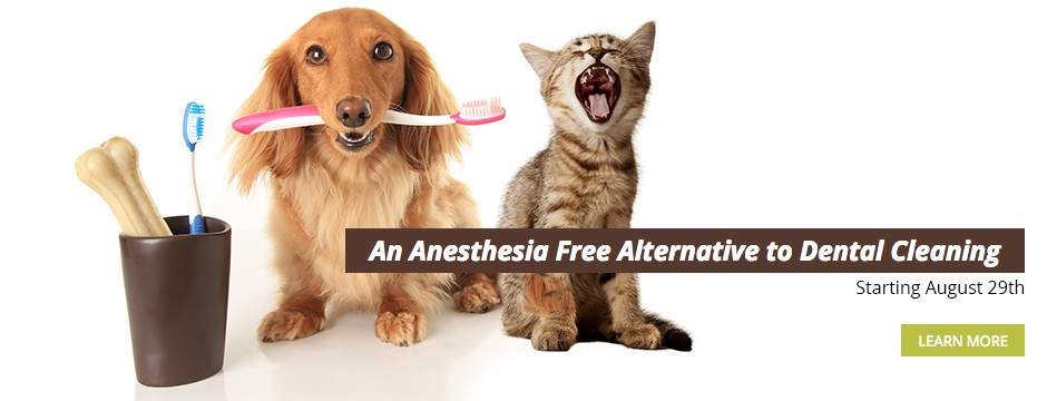 Pawfection Pet dental cleaning with text
