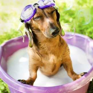 The dog takes a bath with shampoo in the fresh air