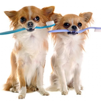 Puppies Ready for Grooming & Dental Care